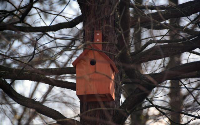Een nestkastje als een villa