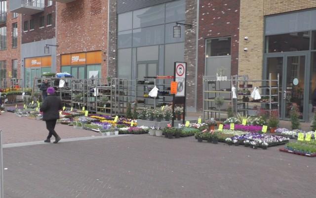 De markt, weer met de plantenkraam