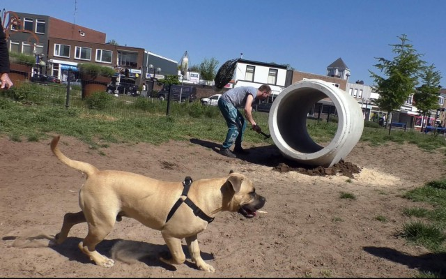 Nieuwe hondenspeelplaats aan Oude Veemarkt