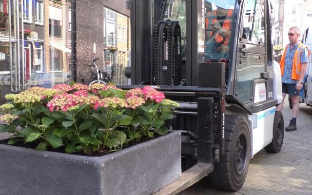 Vierhonderd hortensia's in bakken aan weerszijden van de hele Grotestraat